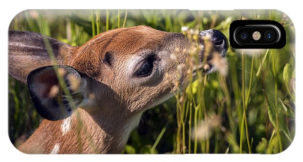 Fawn Smelling The Wildflowers IPhone Case