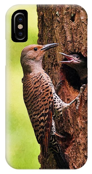 Northern Flicker iPhone Case - Feed Me Digital Painting by Sharon Talson