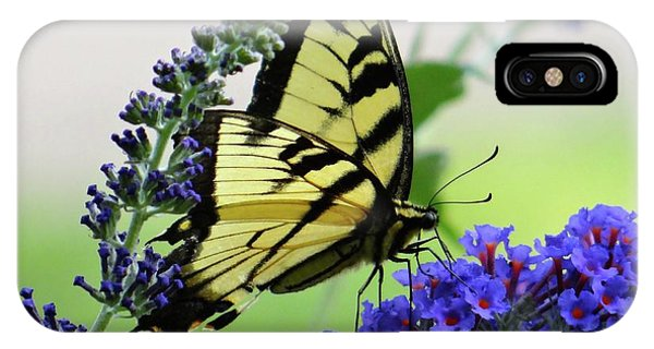 Feeding From A Nectar Plant IPhone Case