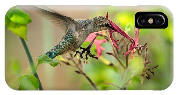 Feeding Hummingbird IPhone Case