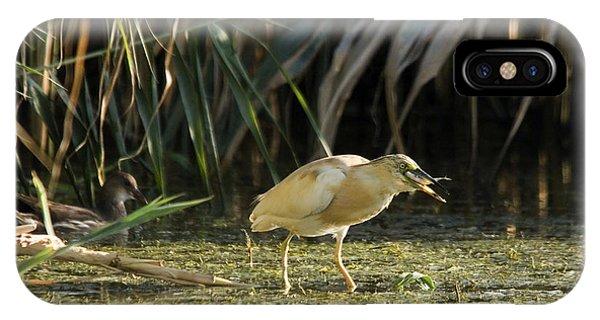 Feeding Squacco Heron IPhone Case