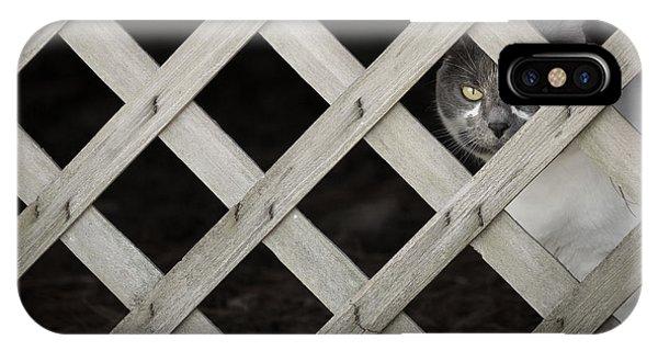 Feline Fence IPhone Case