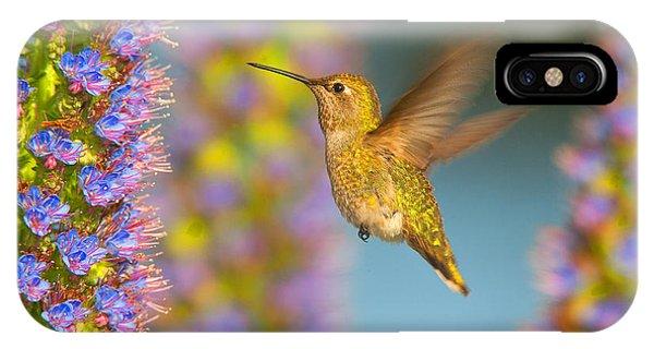 Female Anna's Hummingbird Huntington Beach California IPhone Case