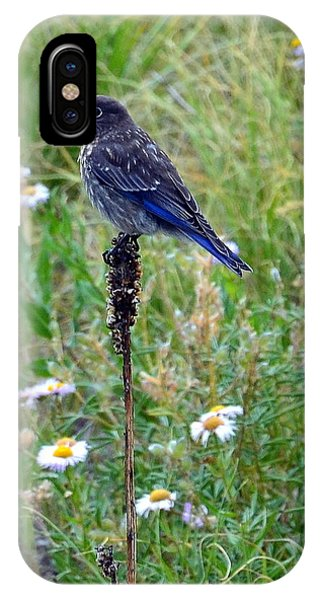 IPhone Case featuring the photograph Female Bluebird by Dorrene BrownButterfield