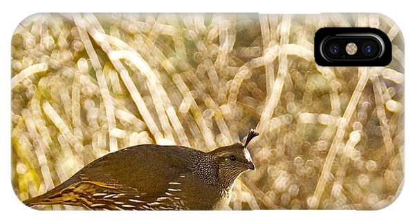 Female California Quail IPhone Case