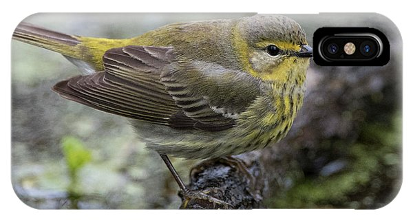 Female Cape May Warbler IPhone Case