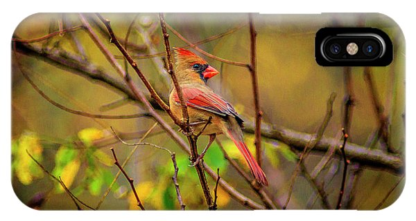 Female Cardinal #1 IPhone Case