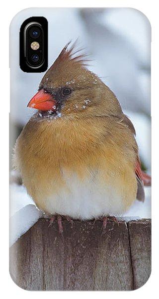 Female Cardinal IPhone Case