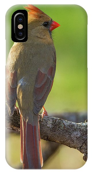 IPhone Case featuring the photograph Female Cardinal by David Waldrop