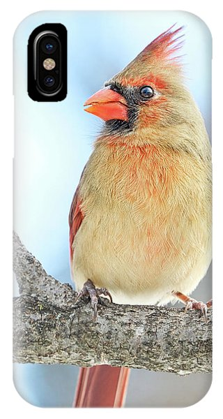 Female Cardinal On A Winter Morning IPhone Case