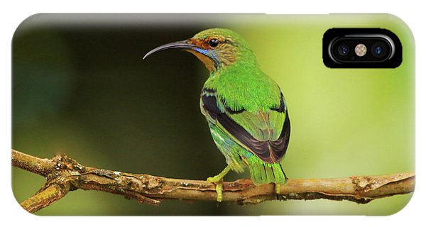 Female Green Honeycreeper At Trinidad's Asa Wright IPhone Case