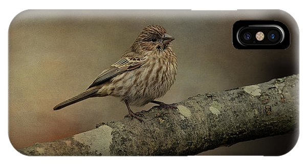 Female House Finch IPhone Case