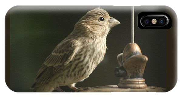 Female House Finch On Feeder IPhone Case