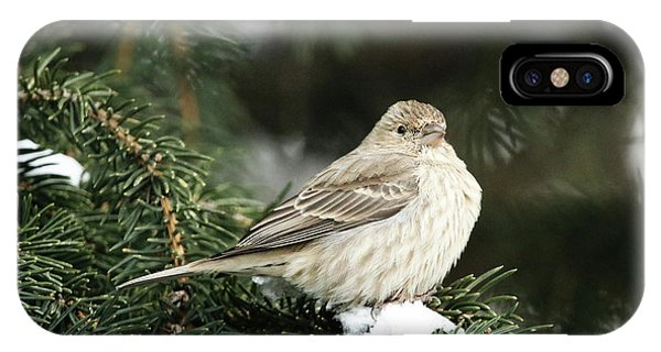 Female House Finch On Snow IPhone Case
