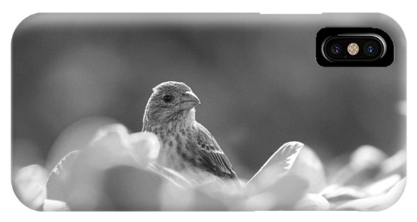 Female House Finch Perched In Black And White IPhone Case