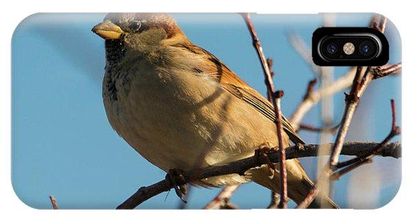 Female House Sparrow IPhone Case