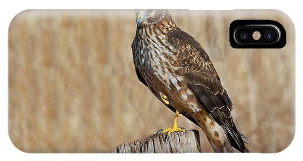 Female Northern Harrier Standing On One Leg IPhone Case