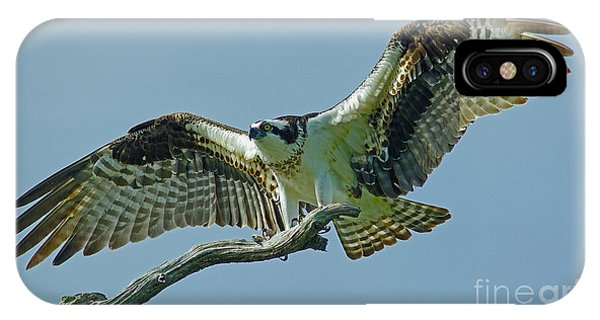 Female Osprey IPhone Case