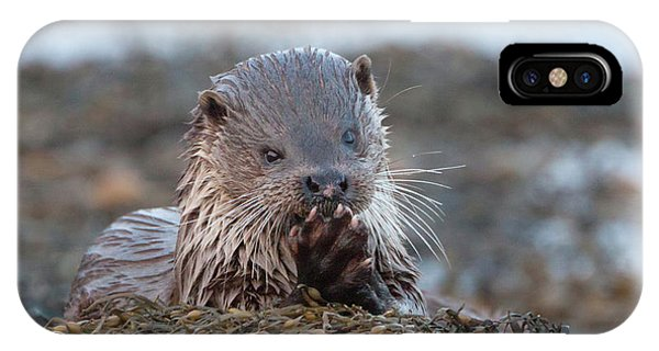 Female Otter Eating IPhone Case