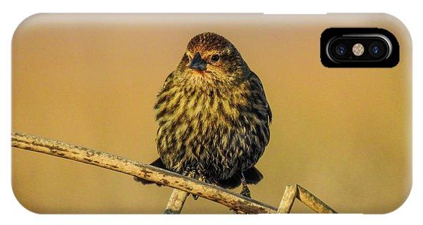 Female Red-winged Blackbird  IPhone Case
