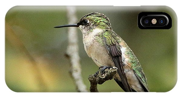 Female Ruby-throated Hummingbird On Branch IPhone Case