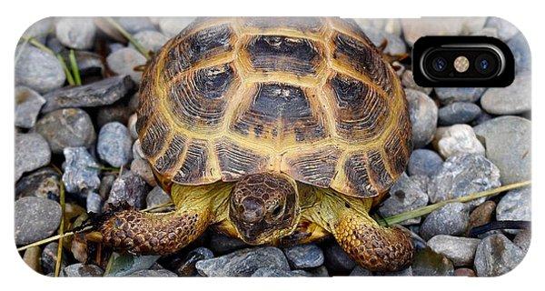 Female Russian Tortoise IPhone Case