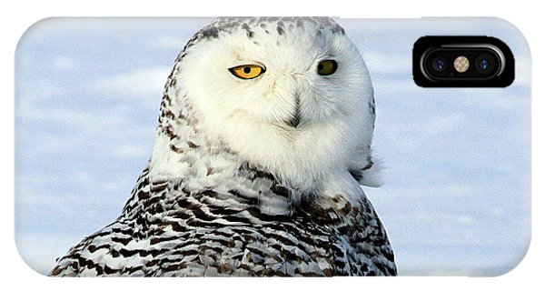 Female Snowy Owl IPhone Case