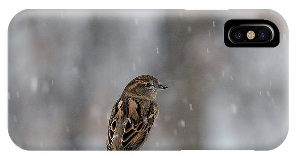 Female Sparrow In Snow IPhone Case