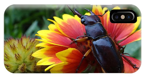 Female Stag Beetle IPhone Case