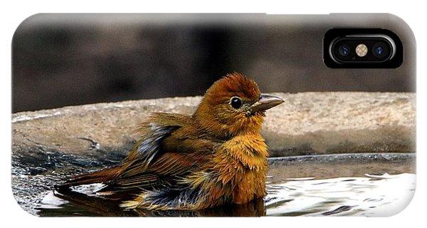 Female Summer Tanager In Bird Bath IPhone Case