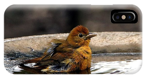 Female Summer Tanager In Bird Bath IPhone Case