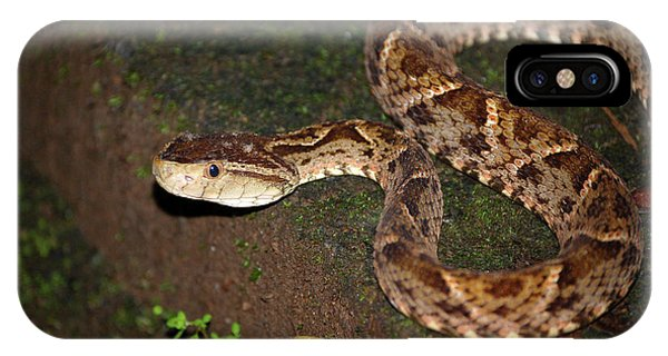 IPhone Case featuring the photograph Fer-de-lance, Botherops Asper by Breck Bartholomew