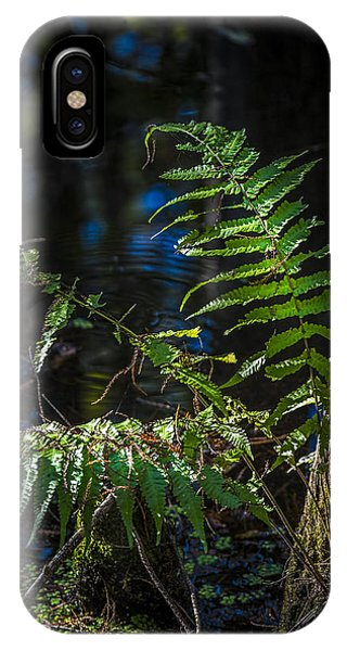 Fern And Cypress IPhone Case