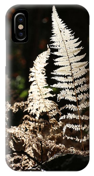 IPhone Case featuring the photograph Fern Glow 2 by William Selander