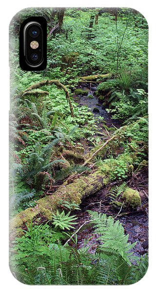 IPhone Case featuring the photograph Ferns Galore by Ben Upham III