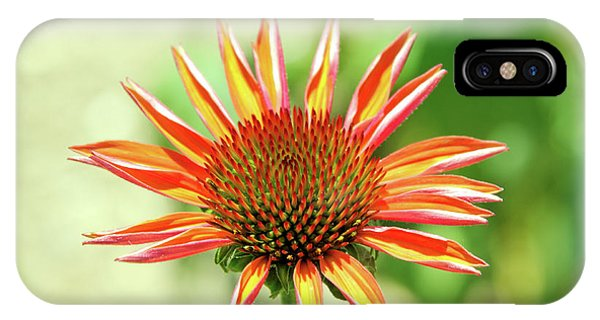 IPhone Case featuring the photograph Fibonacci by David Chandler