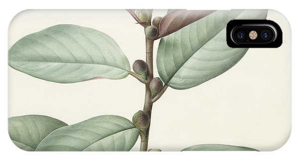 Flora iPhone Case - Ficus Rubeginosa by Pierre Joseph Redoute