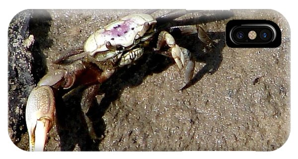 Fiddler Crab IPhone Case