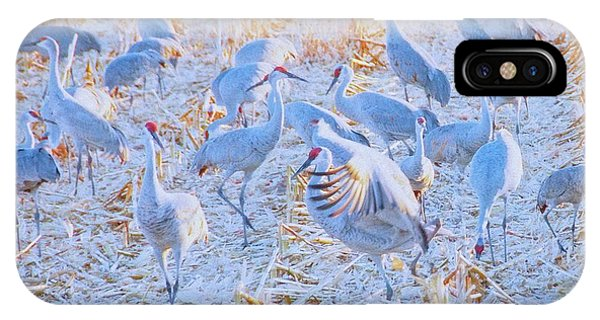 Field Of Cranes, Sandhills IPhone Case