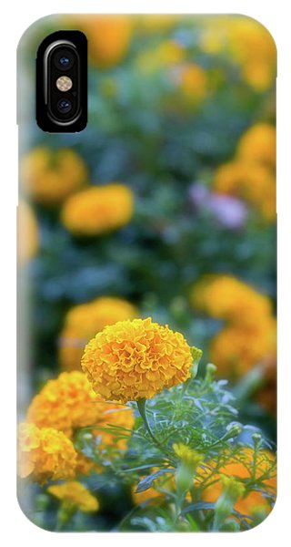 Field Of Gold IPhone Case