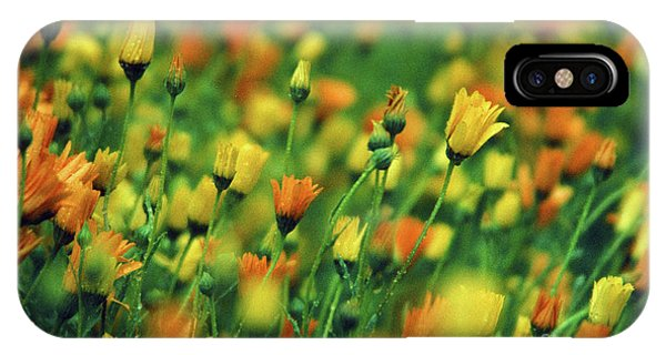 Field Of Orange And Yellow Daisies IPhone Case