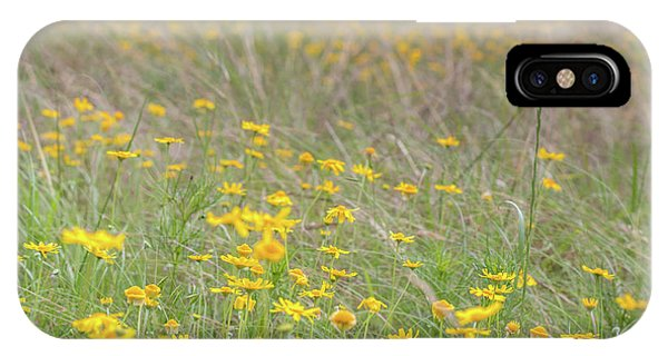 Field Of Yellow Flowers In A Sunny Spring Day IPhone Case
