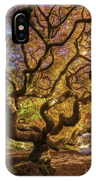 Stamen iPhone Case - Fiery Fall Colors Tree Of Life by Mike Reid