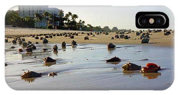 Fighting Conchs At Lowdermilk Park Beach In Naples, Fl  IPhone Case