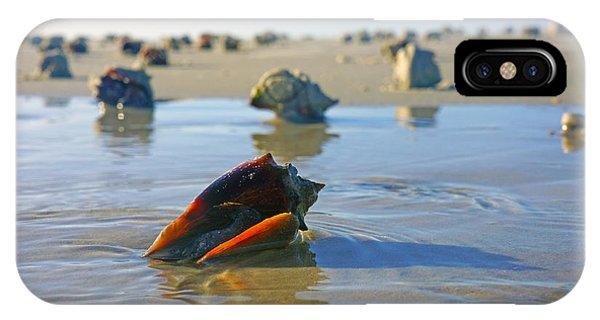 Fighting Conchs On The Sandbar IPhone Case