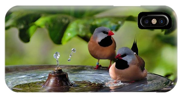 Finch Bath  IPhone Case