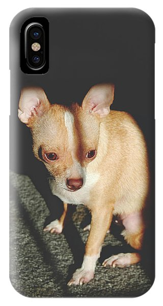 Chihuahua iPhone Case - Finding Sunlight by Laurie Search
