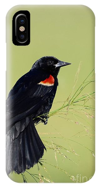 Fine Perch IPhone Case