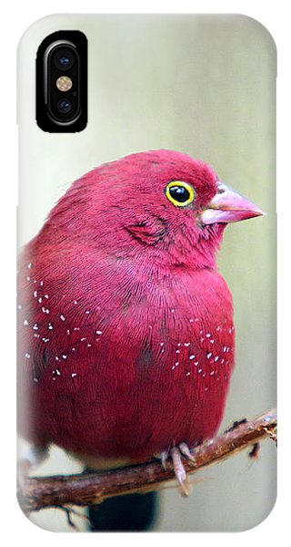 Fire Finch IPhone Case