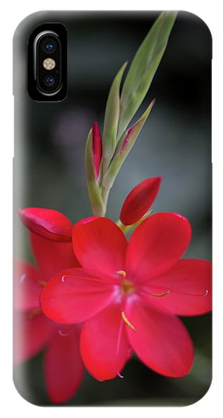 Fire Lily 2 IPhone Case